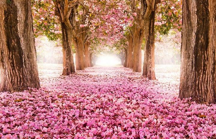 дорога в цветах