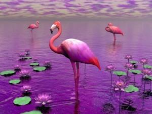 Аффирмация сна Розовые фламинго