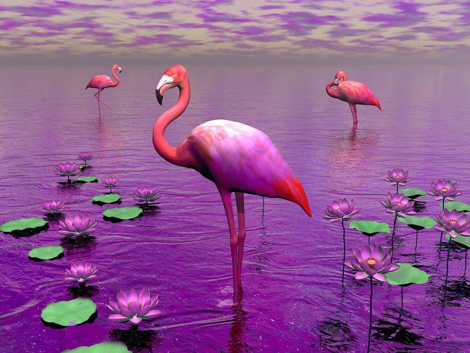 сна Розовые фламинго