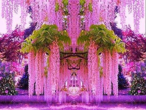 цветы магикум сонник