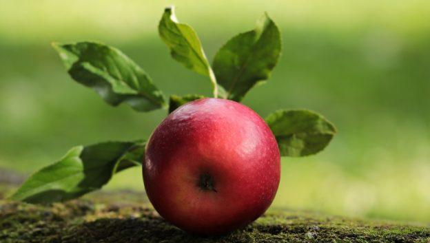 Сонник яблоко