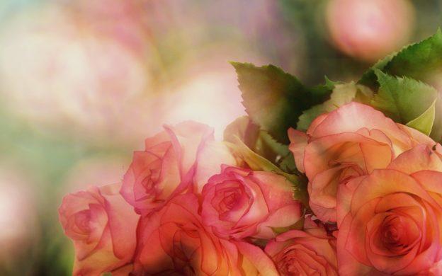 Сонник розы