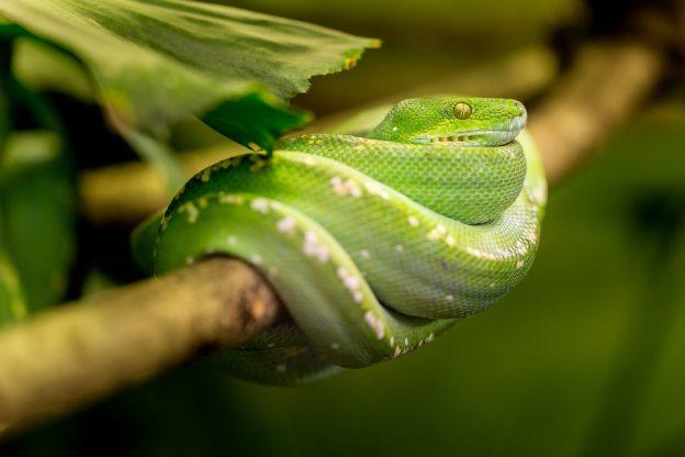 Сонник змея во сне