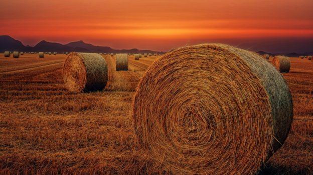Сонник поле видеть во сне