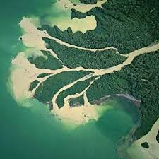 амазонка впадает в море