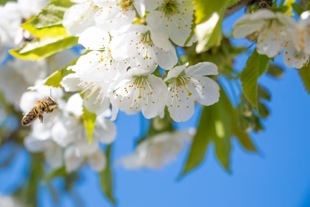 Сонник весна во сне