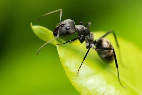 Если во сне убивать муравьев...