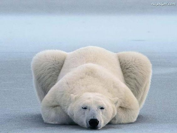 Медведь во сне...