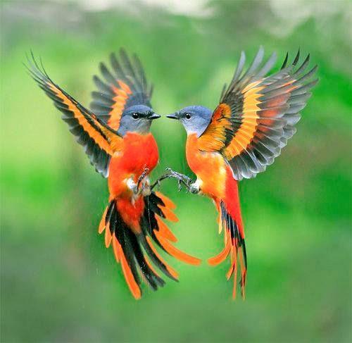 Если снятся разные птицы