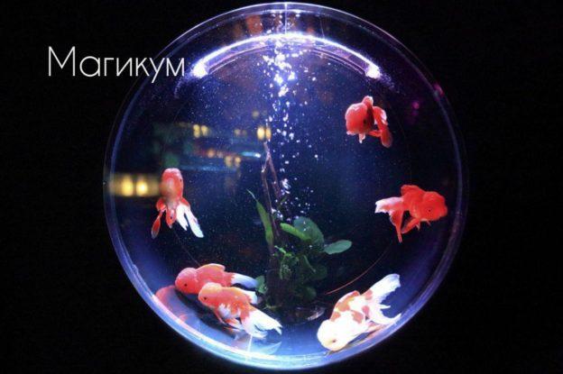 Дохлые рыбки в аквариуме во сне