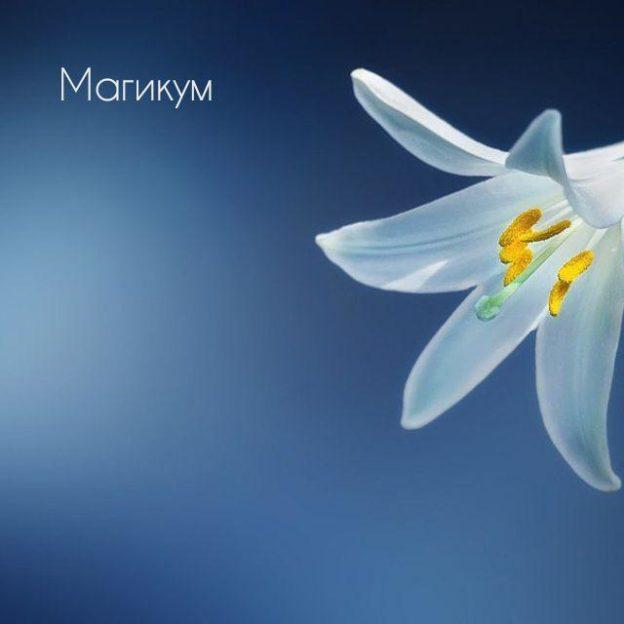 Синий полузасохший цветок во сне