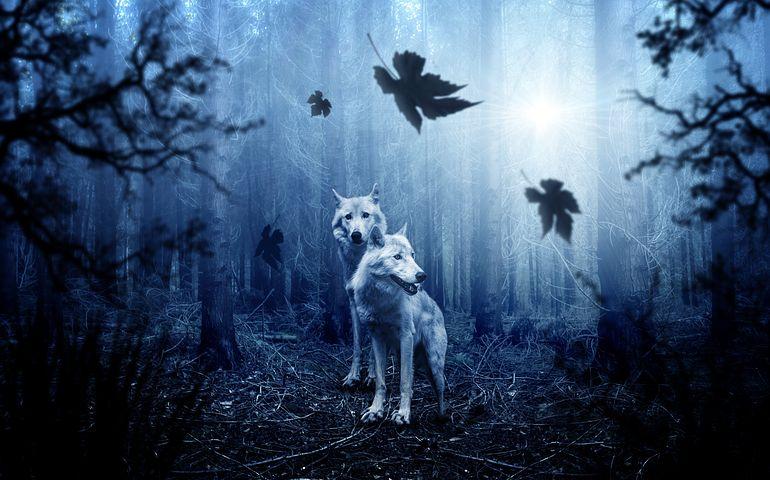 Сонник волк снится Толкование сна