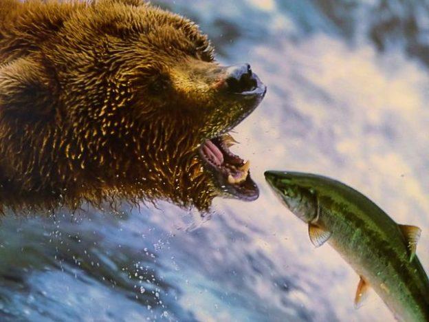 Сбывшийся сон про запрет на ловлю рыбы