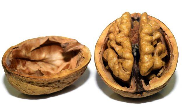 Сонник грецкие орехи снятся Толкование снов